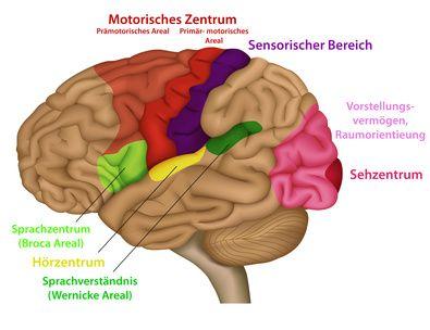 Funktionsbereiche des menschlichen Gehirns